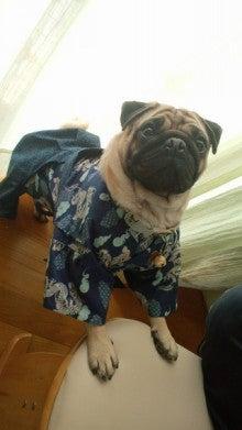 愛犬yuzuとyuzuママ手作り洋服屋さんの日々★-ぼん1