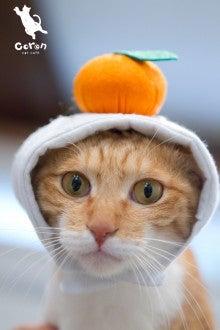 佐賀の猫カフェコロンの癒しブログ