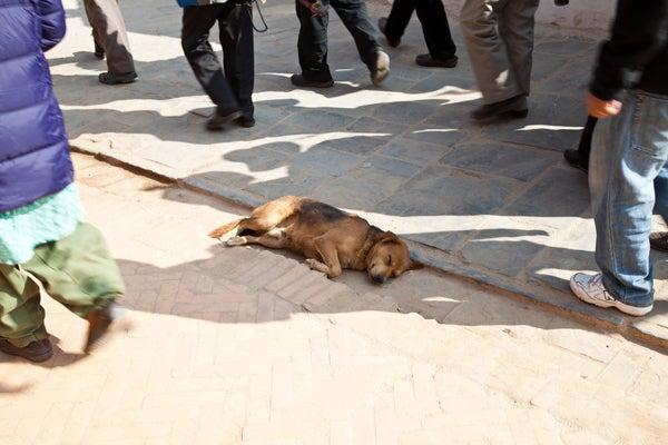 ベンガル猫のひめちゃん-犬4