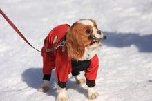 犬旅大好きのぐらんぱう ペット宿.com公式ブログ