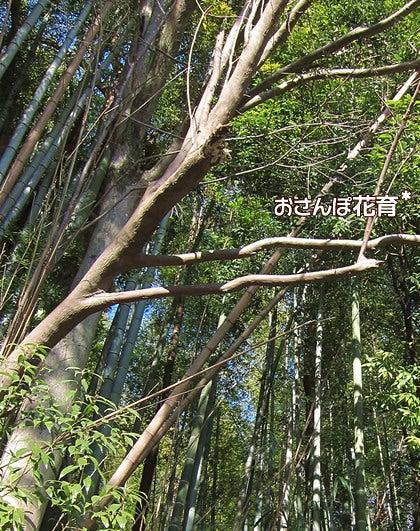 動画で見る!3分フラワーアレンジ-竹もたくさん生えてます