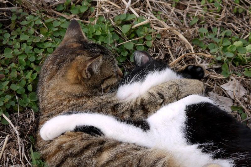 福岡 公園 ネコ 猫 駕与丁公園