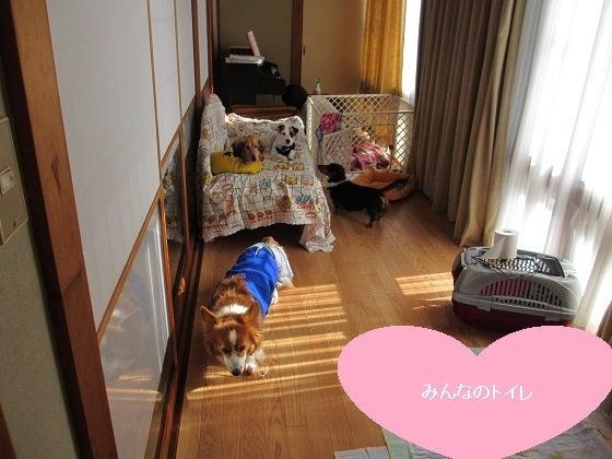 HANNAH-花-の日記-お部屋01JAN12