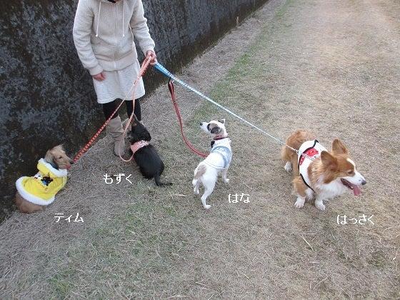 HANNAH-花-の日記-お散歩01JAN12