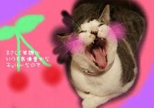 $キッチン八重歯  asaco blog