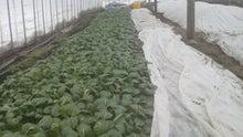 ファーマー太田のガチンコ農業ブログ-2012011614560000.jpg