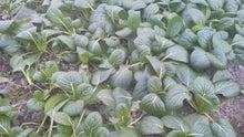 ファーマー太田のガチンコ農業ブログ-2012011614560001.jpg