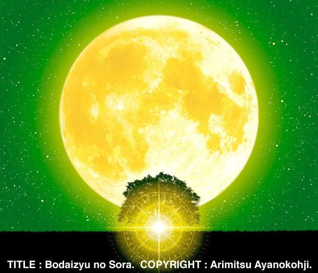 菩提樹の宙