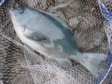 釣り時々仕事