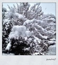 vagabond squaw-雪国