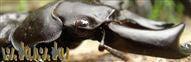 R32スカイラインを愛する専務のblog-わくわくの森