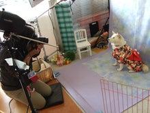 名古屋にあるドッグカフェ・スマイルドッグカフェ-撮影8