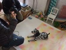 名古屋にあるドッグカフェ・スマイルドッグカフェ-satuei