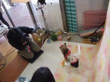 名古屋にあるドッグカフェ・スマイルドッグカフェ-撮影13