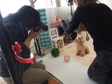 名古屋にあるドッグカフェ・スマイルドッグカフェ-撮影9