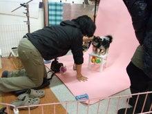 名古屋にあるドッグカフェ・スマイルドッグカフェ-撮影1