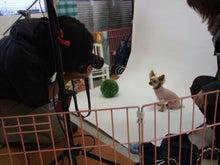名古屋にあるドッグカフェ・スマイルドッグカフェ-撮影14