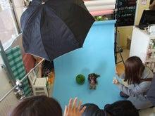 名古屋にあるドッグカフェ・スマイルドッグカフェ-撮影12