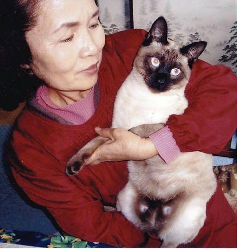 $世界中の猫を集めてみました。