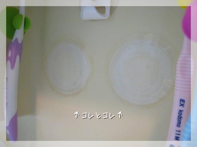 桜日和のひなたぼっこ