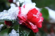 「ぎゃらりーたちばな」更新日記-大乗寺 雪とサザンカ