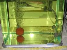 快水魚の祝宴-隔離水槽