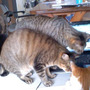 やっぱり猫が好き