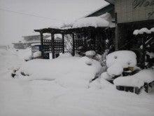 IWASAKI「木の仕事」-雪01