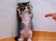 yamayasu88さんのブログ-猫