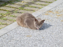 $ジーナのブログ (うん子な日々)-猫
