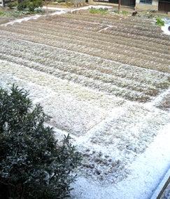 ALL OK!でしょ-畑の雪