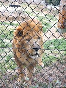 ALL OK!でしょ-ライオン