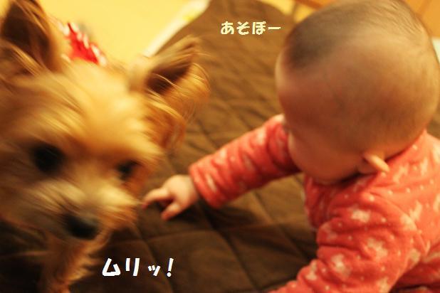 マリー☆と一緒
