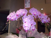祇園の住人 お水編-IMG_20120212_150459.jpg