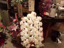 祇園の住人 お水編-IMG_20120212_150433.jpg