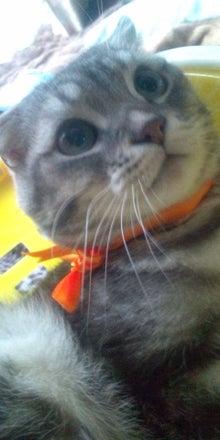 ウサ猫とポチャ猫-20120214152854.jpg