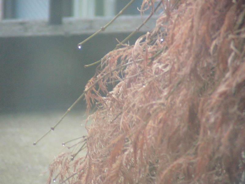 おまけ道@琵琶湖畔で実家生活♪ポテチンっ♪-20120215