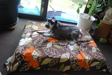 犬の車椅子のtadatomo工房