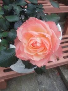 $蓮美咲のスピリチュアリティブログ-1329379138614.jpg