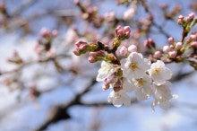 京都観光お役立ちblog☆京都Loversフォーラム☆