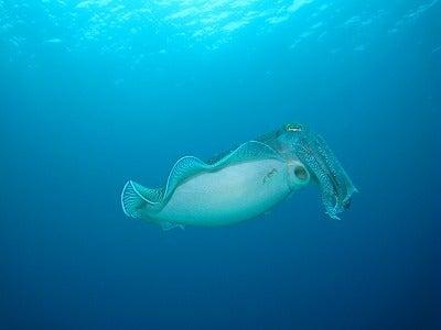 沖縄ダイビング ダイブハウスワンピース