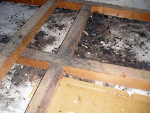 害虫・害獣から街を守るPCOの調査日記-ネズミ糞と粘着トラップ