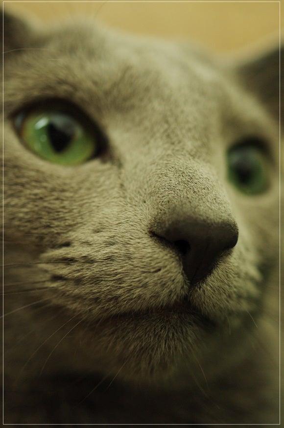 猫と写真と相方と