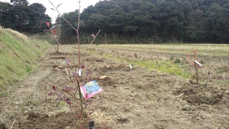 清末のみかん農家+α-CA3I0206.jpg