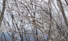 .-0221三峰山(霧氷