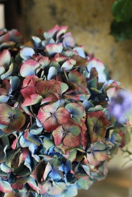 花の座サンキュークリエーターの楽屋裏