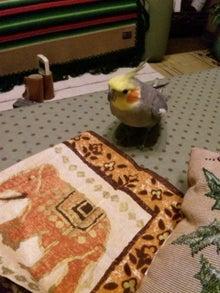 オカメインコのももちゃんと花教室と旅日記-120221_203838.jpg