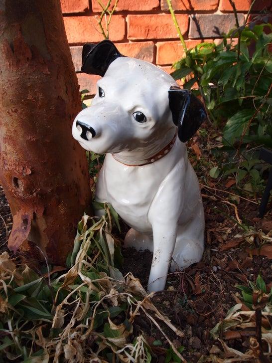 キヨミのガーデニングブログ 長澤淨美のアメブロオフィシャルブログPowered by Ameba-ビクター犬ニッパーの画像
