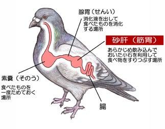 川崎悟司 オフィシャルブログ 古世界の住人 Powered by Ameba-ハトの内臓図