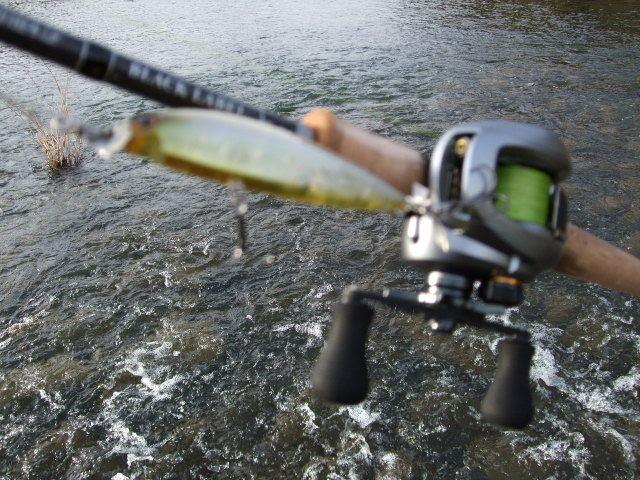 一魚専心-2273